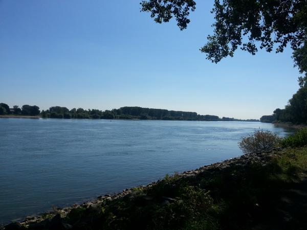 Leinpfad am Rhein bei Nackenheim