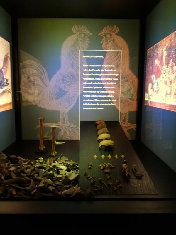 Vögel Knochen im Isis-Museum Mainz