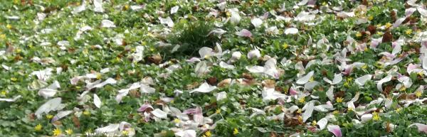 #Schlössersafari und #blütenstaubsafari an der Bergstraße